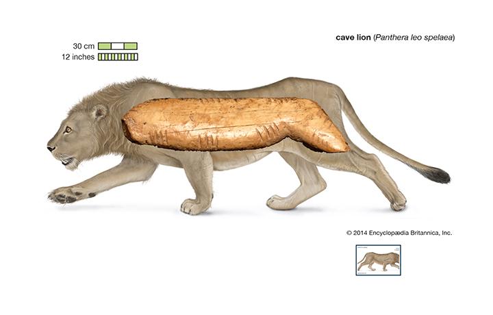 Figurina pećinskog lava otkrivena je u pećini Denisova