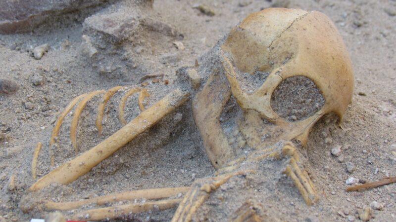 """Majmuni sahranjeni poput """"uspavanih beba"""", importovani su u drevni Egipat iz Indije kao kućni ljubimci"""