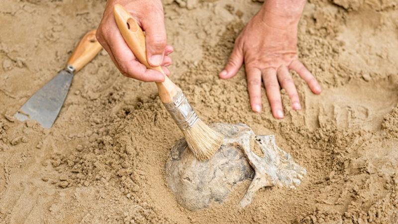 Međunarodni dan arheologije