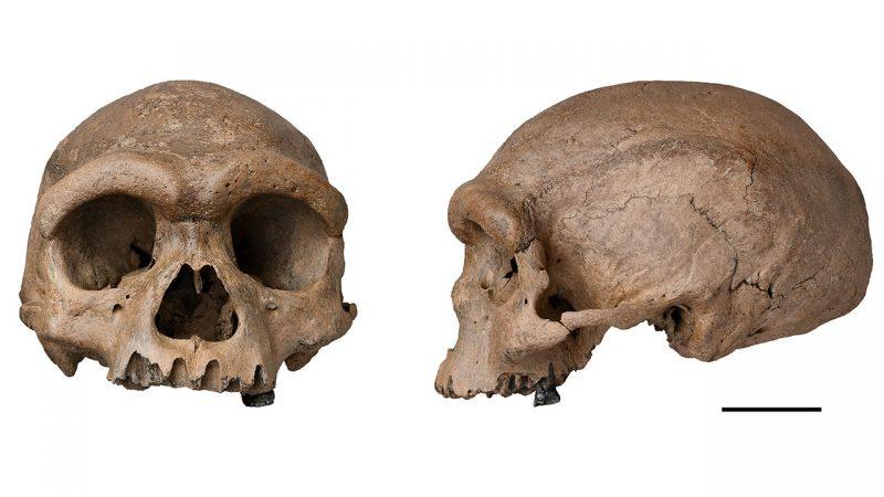 """Da li je otkrivena nova ljudska vrsta Homo longi """"čovek zmaj""""?"""