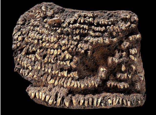 Najstarija torbica na svetu dekorisana psećim zubima